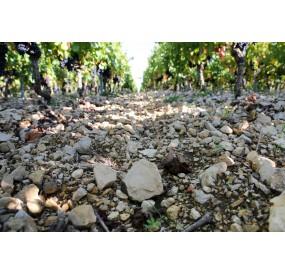 Terroir argilo calcaire du Kimméridgien à Cahors