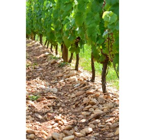 Vignoble du sud ouest