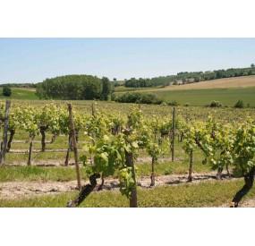 Vignoble AOC buzet, Maison Georges Vigouroux