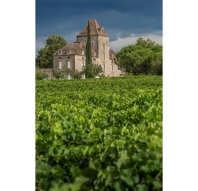 Château de Haute-Serre, Vignoble de Cahors