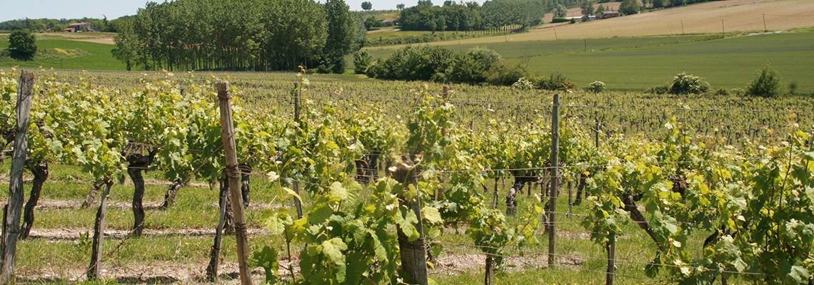 Vin du Château Tournelles - AOC Buzet - Atrium Vigouroux