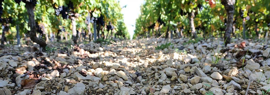 Vin du Sud-ouest - Achat vins du Sud Ouest - Atrium Vigouroux