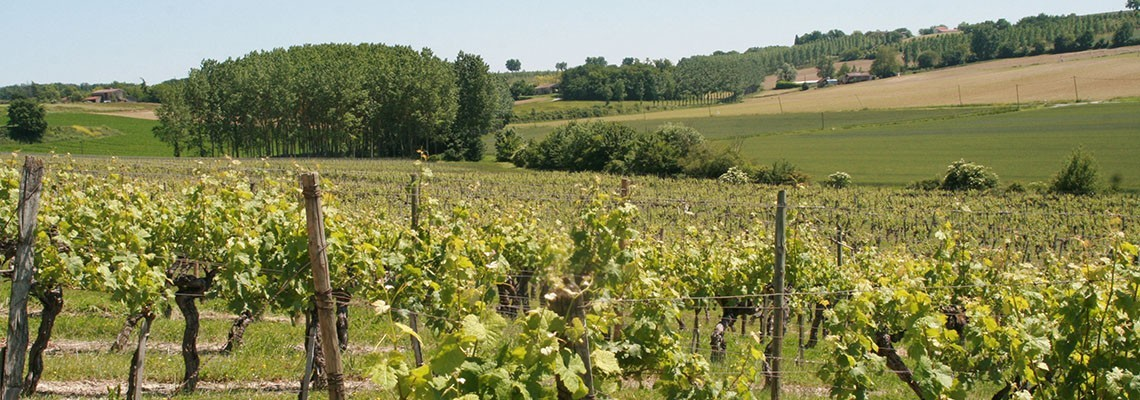Vin de Buzet - Achats vins de Buzet et Brulhois - Atrium Vigouroux