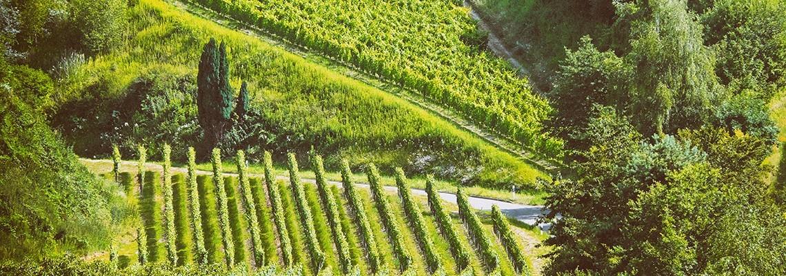 Vin Fronton - Achat vins de Fronton cépage Négrette - Atrium Vigouroux