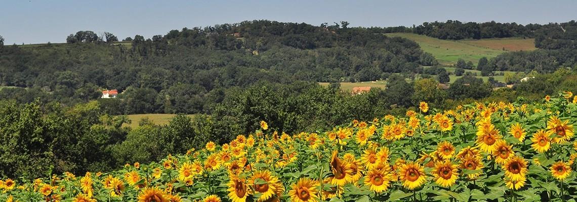 Vin Pacherenc du Vic-Bilh : achat vins en ligne - Atrium Vigouroux