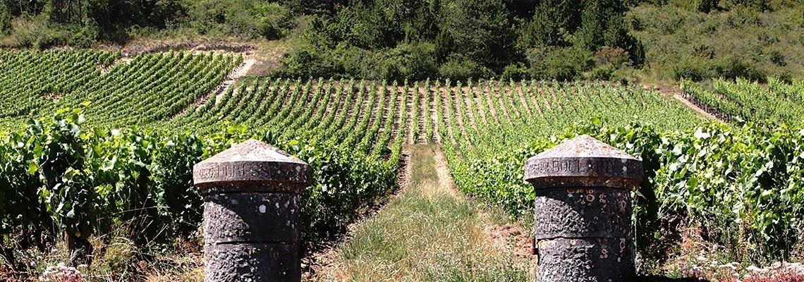 Sélection de vins France et monde : vente en ligne - Atrium Vigouroux