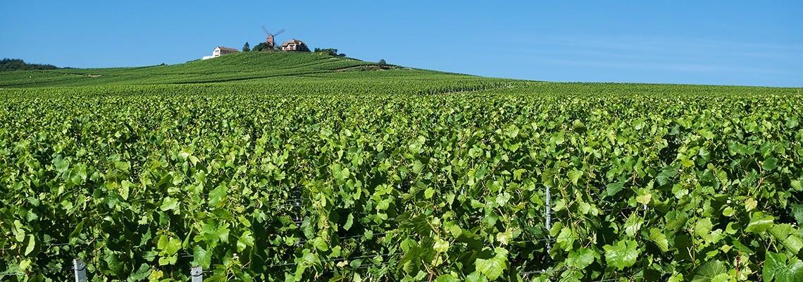 Champagne :  Achat vin Champagne en ligne - Atrium Vigouroux