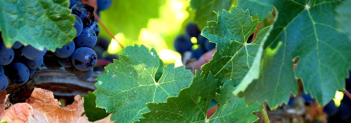 Sélection de vins Merlot