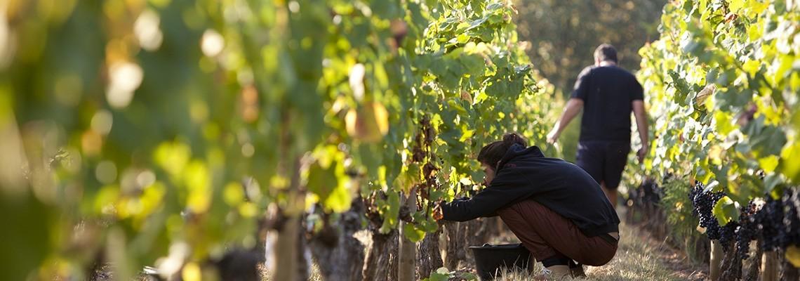 Nos vins de Braucol