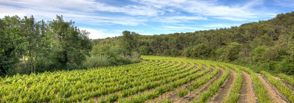 Nos vins de Carignan