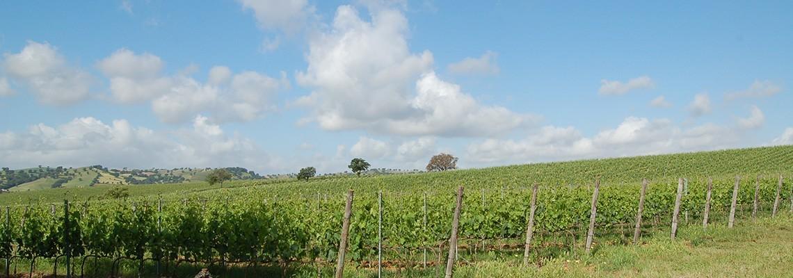 Sélection de vins Vermentino