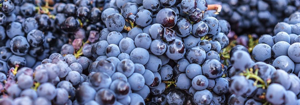 Nos vins de Mourvèdre
