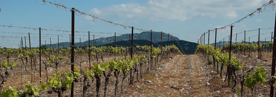 Vins de La Clape, vente en ligne AOC La Clape -  Atrium Vigouroux