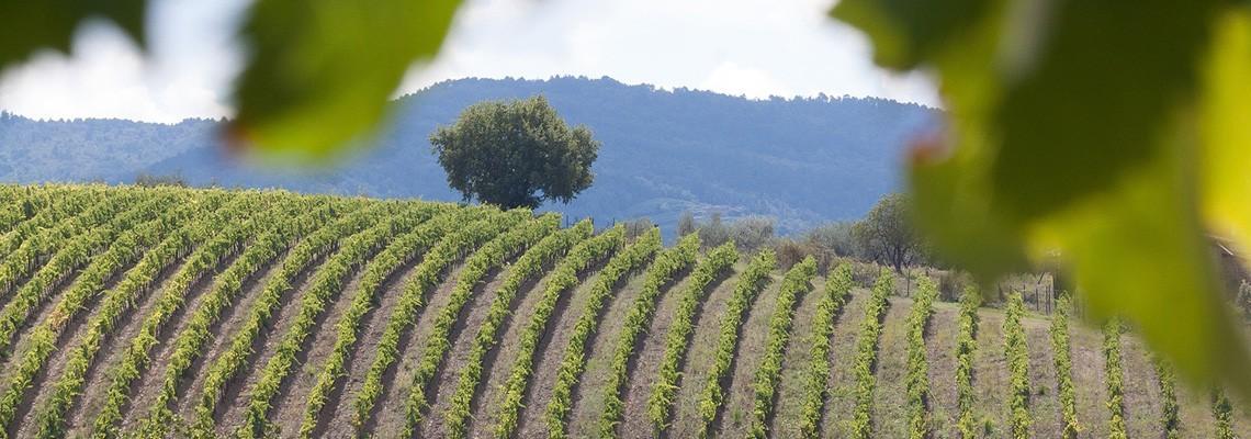 Les vins des vignerons du Brulhois - Atrium Vigouroux