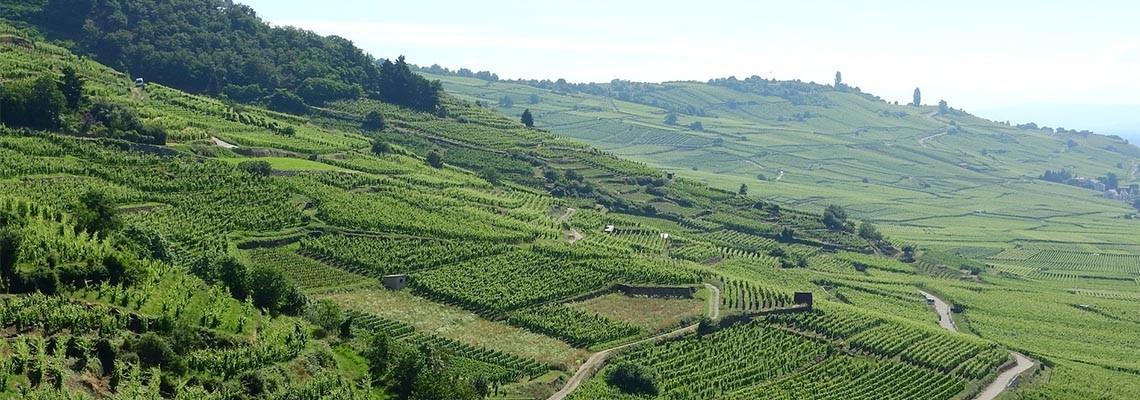 AOC Alsace et Alsace Grand Cru